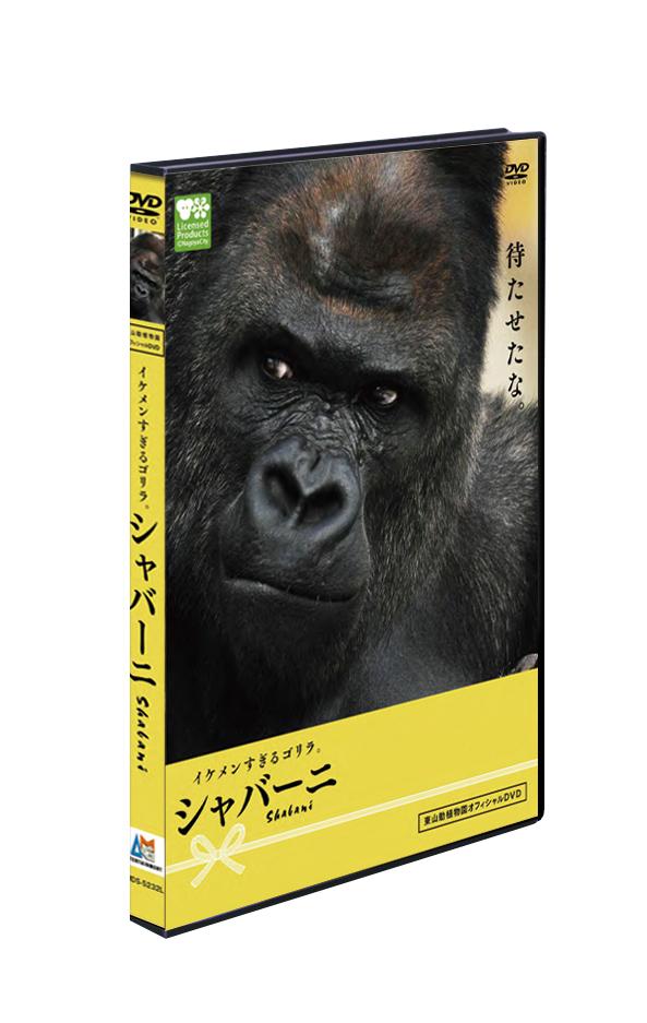 東山動植物園オフィシャルDVD「イケメンすぎるゴリラ。シャバーニ」 画像1