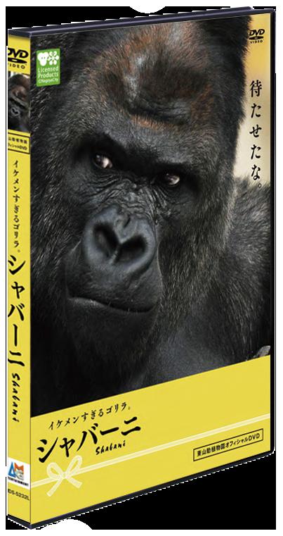 イケメンすぎるゴリラ。シャバーニ DVD